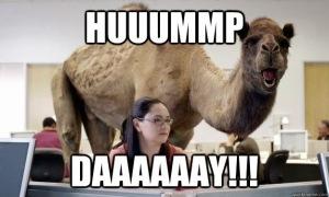 hump-day