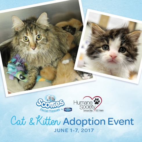 Scotties_CatAdoption_FB_HS